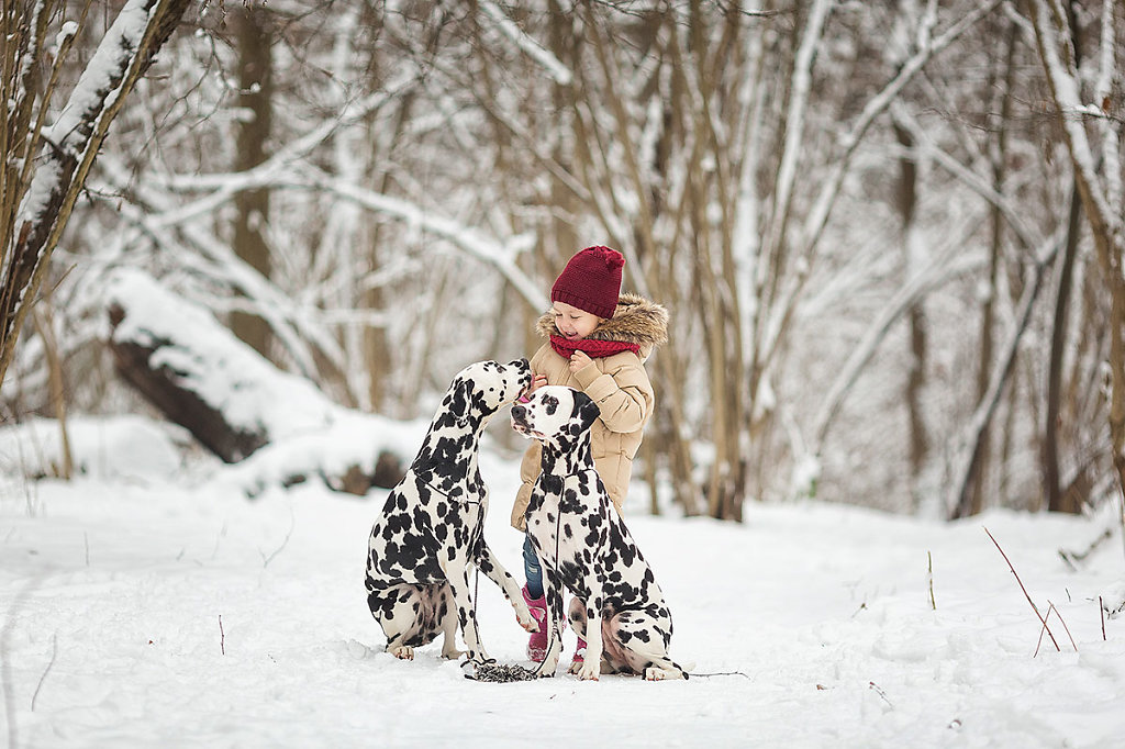 Зимняя Фотосессия с далматинцами