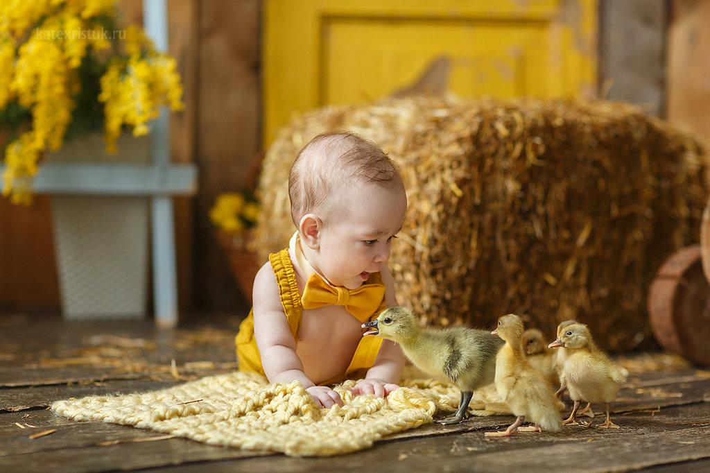 Малыш и утята фото